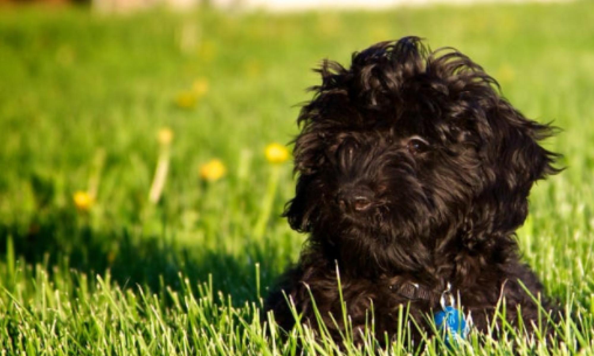 Hundtillbehör och information för alla hundägare | Hundaffarn