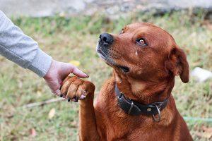 Folksam hund bästa hundförsäkringen