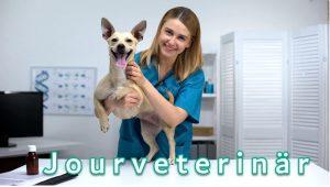 jourveterinär och veterinärer online