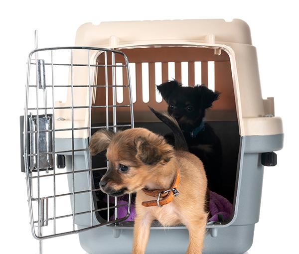 Hundbur – Vad bör du tänka på? Rekommendationer om transportburar till din hund